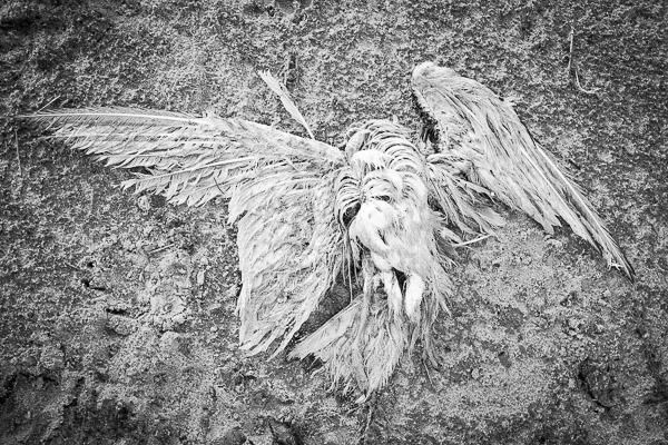 IdaMeertens: Icarus